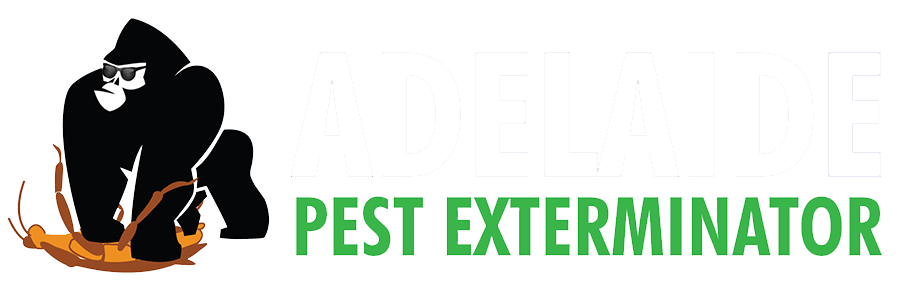 Adelaide Pest Exterminators | Termites | Rodents | Spiders | Cockroaches