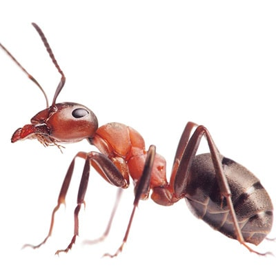 Ant Control & Extermination Gulf View Heights