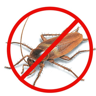 cockroach pest control in Adelaide