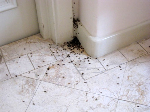Ant Pest Control Adelaide